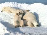Хатха-Йога для начинающих. Белый Медведь-1