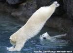 Хатха-Йога для начинающих. Белый Медведь-58