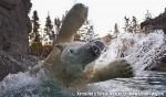 Хатха-Йога для начинающих. Белый Медведь-56