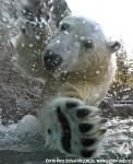 Хатха-Йога для начинающих. Белый Медведь-4
