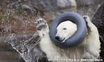 Хатха-Йога для начинающих. Белый Медведь-3