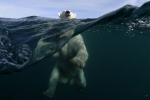 Йога-тур в Гималаи. Отдых в Индии. Фото белого медведя