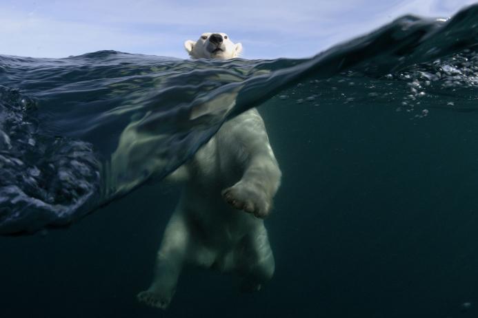 Фото Интересно о Белых Медведях
