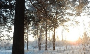 """Зимний семинар """"Ледяной ожог"""". Йога для начинающих и продвинутых, усиление иммунитета"""