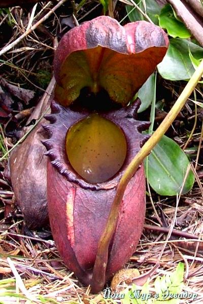 Тур в Эквадор. Растения Эквадора-4