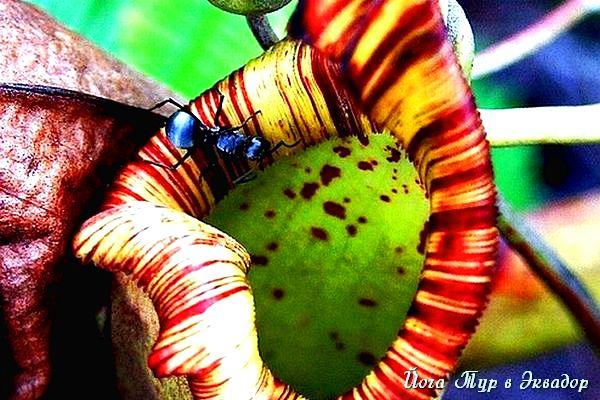 Тур в Эквадор. Растения Эквадора-8
