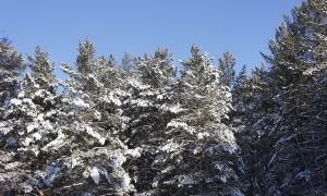 отдых на зимние каникулы