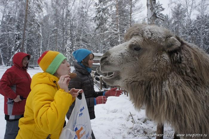 Отдых на Алтае и новогодние каникулы-167