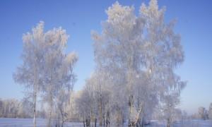 Ледяной ожог-2013