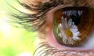 курс по исправлению зрения
