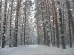 зимние каникулы-4