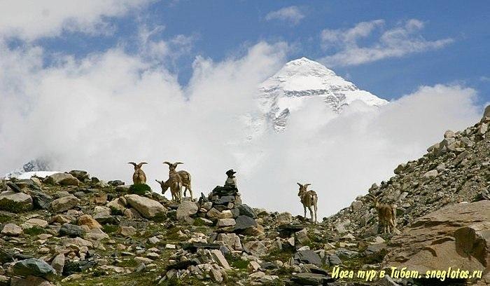 Йога-тур в Тибет-7