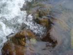 отдых и тренинги на Алтае. купание в горной рекеее