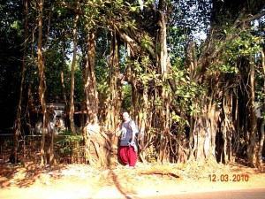 Йога-тур в Индию. Священное дерево Бодхи